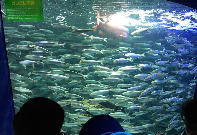 サンシャイン水族館イワシの水槽