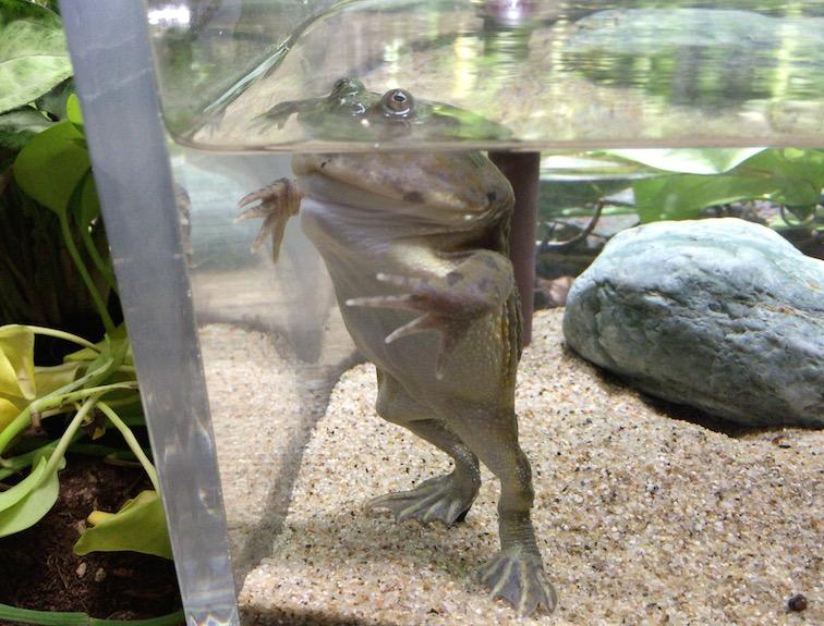 サンシャイン水族館カエル水槽