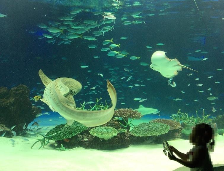 サンシャイン水族館トラフザメ水槽
